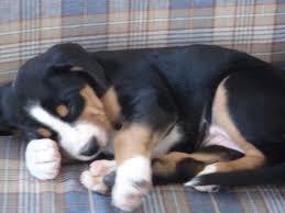 sleep-doge
